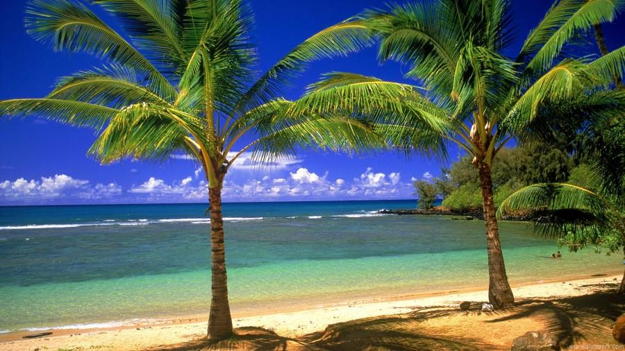 BREAKING: Prom 2014 Goes Tropical
