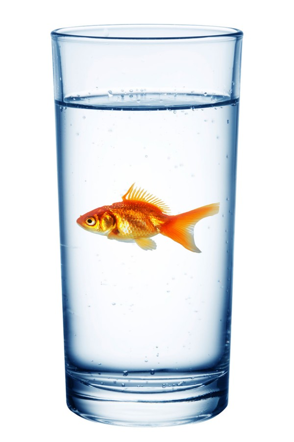 Do+Fish+Drink+Water%3F