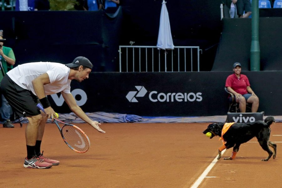 A ball retrieval dog returns a ball at last year's Brazil Open.