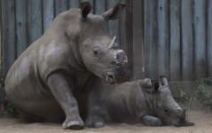 The Impact of Rhino Extinction