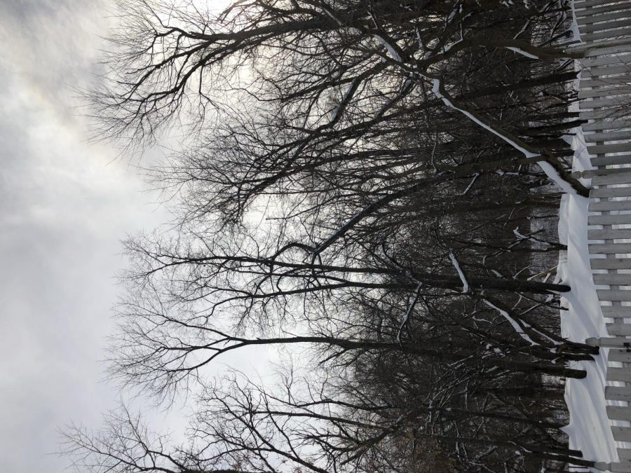 The snow blankets trees and grass