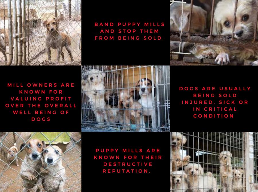 Puppy Mill Crackdown