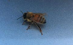 Bees May Be Making a Comeback