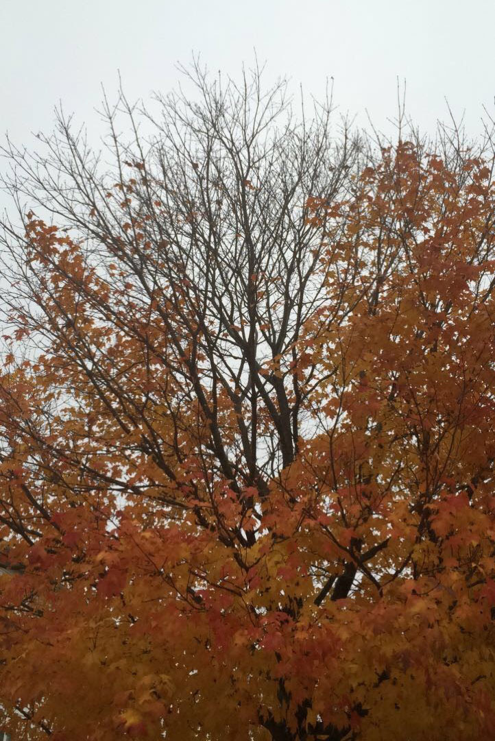 Fall colors and weather brings fun activities and positive moods.