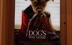 Review: A Dog's Way Home