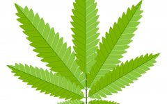 Make Way for Marijuana